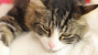 My Cat Has Cancer: Staging and Grading the Tumors