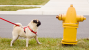 Pollakiuria: Why is My Dog Urinating more Often?
