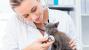 Your New Kitten Checkup