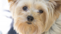 Protein-Losing Enteropathy (PLE) in Dogs