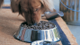 Young Adult Nutrition for Dogs