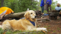 Your Dog and the Dangers of Lyme Disease: Part I