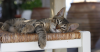 Help Your Cat Beat the Heat This Summer!
