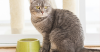 Finicky Felines Finally Understood – New Study Batters Beliefs About Cat's Bitter Taste Preferences