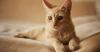 Mammary Tumors in Cats