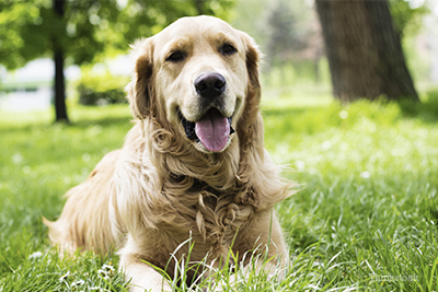 10 Common Causes Of Kidney Disease In Dogs