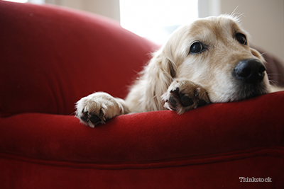 Top 5 Most Damaging Kidney Toxins For Dogs