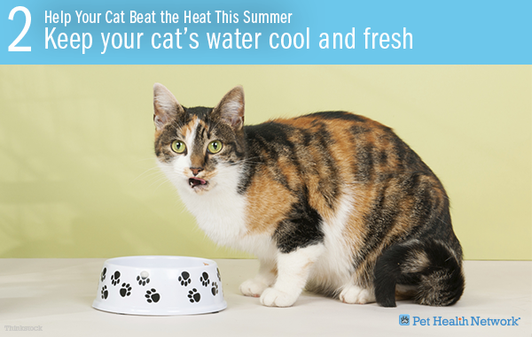 Help Your Cat Beat The Heat This Summer