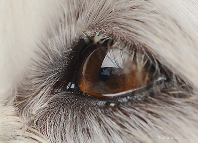 Closeup of dog's eye