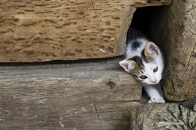 stray kitten between a pile of logs