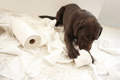 Puppy tearing up paper in the bathroom