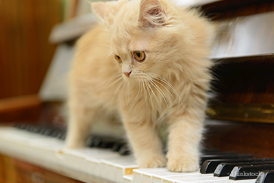 Kitten on piano