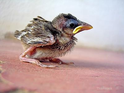 Lost baby bird