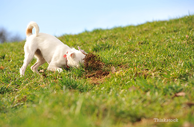 dog digging into dirt