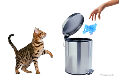 cat by trash can