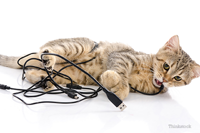 why does my cat chew electrical cords. Black Bedroom Furniture Sets. Home Design Ideas