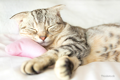 Cat sleeping on pillow