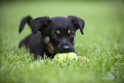 Puppy playing with a ball