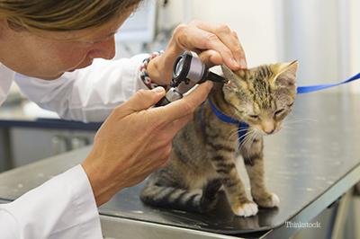 روشهای درمانی دامپزشکی سگ و گربه