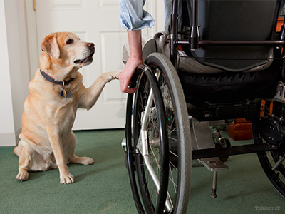 Dog and Man in wheelchair